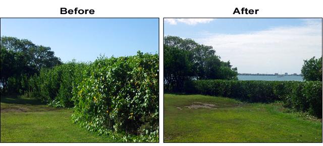 Professional Mangrove Trimming