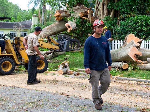 tStorm damaged Banyan tree